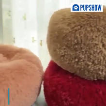 Video ad - ad copy(The Pup Show is a premium) - Copy 2.mp4