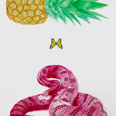 Timber Rattler, Butterfly, Pineapple