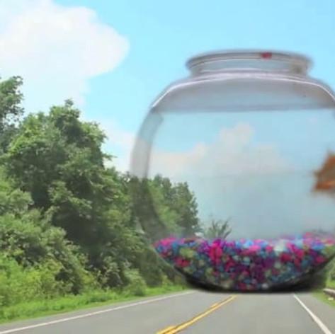 A Goldfish Documentary