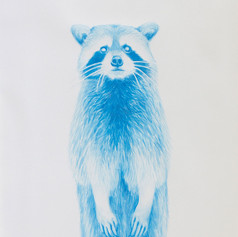 Blue Raccoon