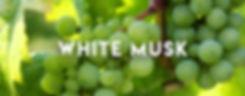 White Musk Banner.jpg