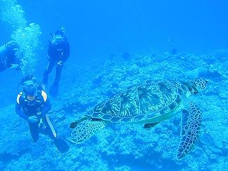 沖縄慶良間諸島でのダイビングでウミガメを眺める風景.jpg