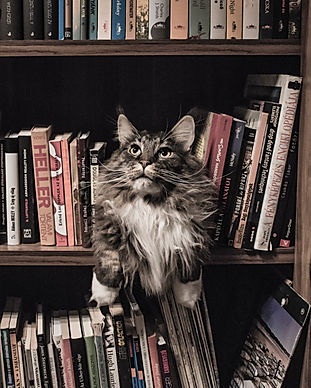 animal-bookcase-books-156321.jpg
