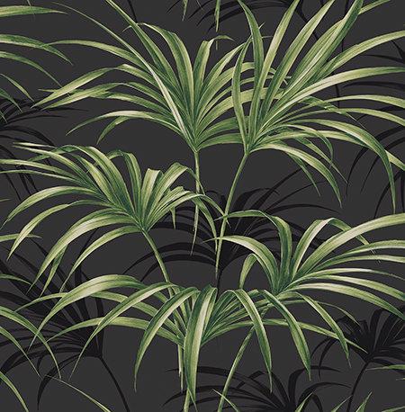 Open Palm Leaf