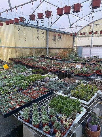 succulents 3.jpg