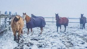 Winter Wonder Ponyhof