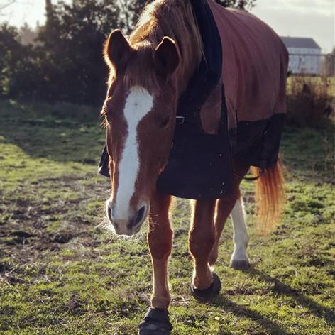 Wenn Pferde alt werden ... ⠀⠀⠀⠀⠀⠀⠀⠀⠀⠀⠀⠀⠀