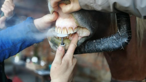 Wenn die Zahnfee kommt ...