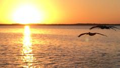 Estero Bay Tranquility