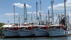 Shrimp Boat Fleet at Matanzas Harbor
