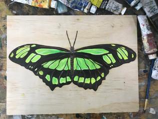 Butterfly 8, 2018