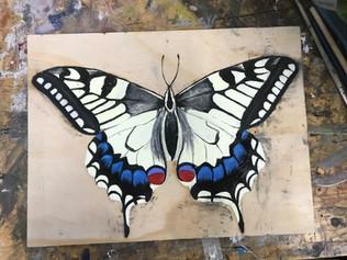 Butterfly 9, 2018