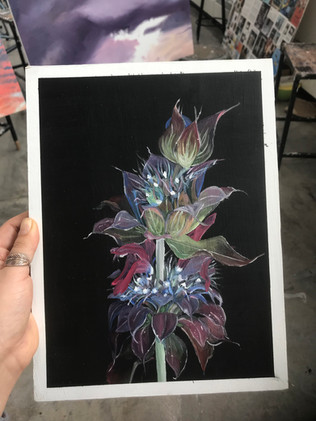 Monarda Plant, 2018