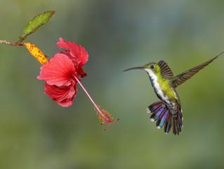 The Nectar Teachings Of Miskayani