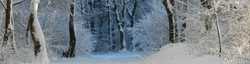 winter-343512.jpg
