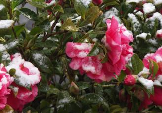 Musings on a Snowy Spring Equinox