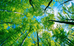 green-forest-tree-and-pure-blue-sky-wide.jpg