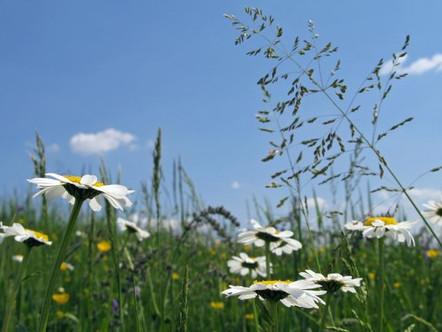 der Frühling und seine Folgen ...