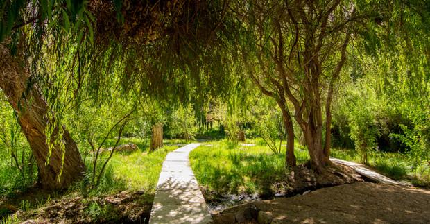 Bosque Aldea del Valle