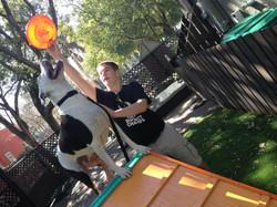Dog Rescue 1