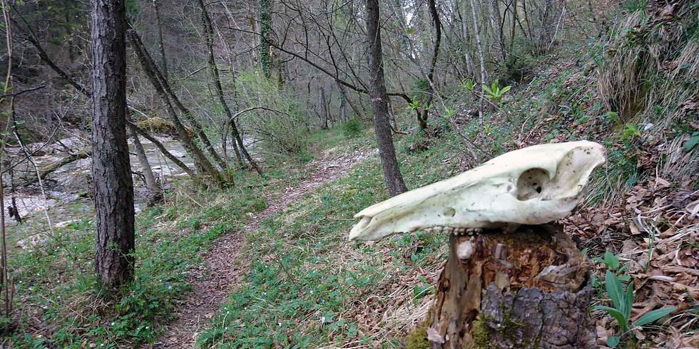 Extreme Wilderness Weekened Survival