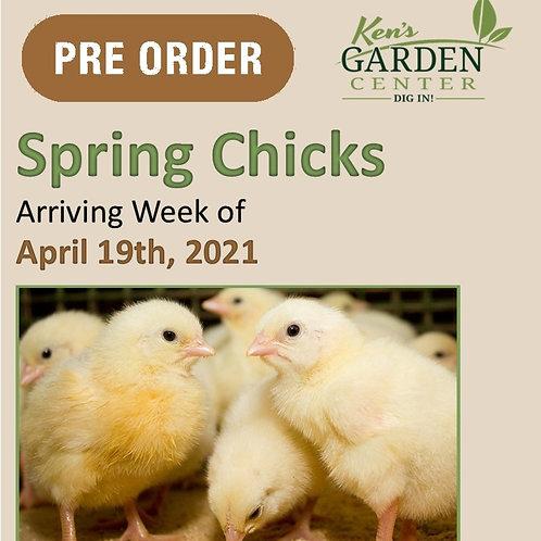 Chicks Arriving Week of 4/19/2021