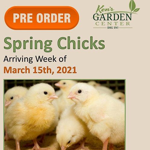 Chicks Arriving Week of 3/15/2021