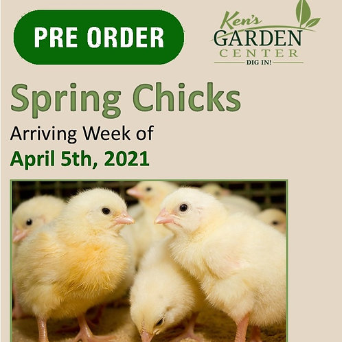 Chicks Arriving the Week of 4/15/2021