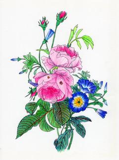 花系列:夏日燈籠