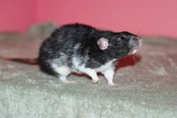 Severusx