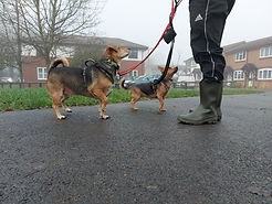 Dog Matters Annie and Dex