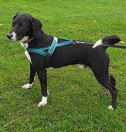 Dog Matters Comet review.jpg