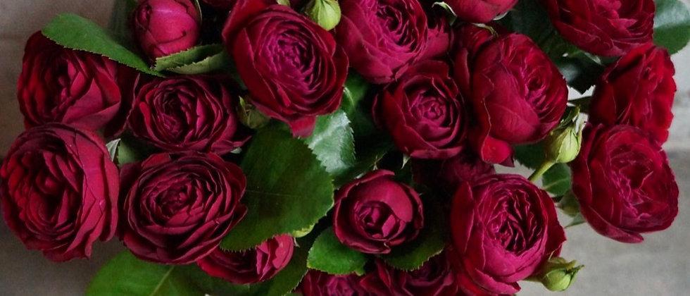 Кустовая Роза РУБИ БИЖУ в фирменном пакете La Tulipe / 9 шт.