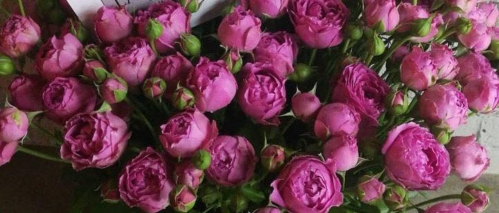 Яркий объемный букет из Мисти БАБЛС в фирменном пакете la tulipe
