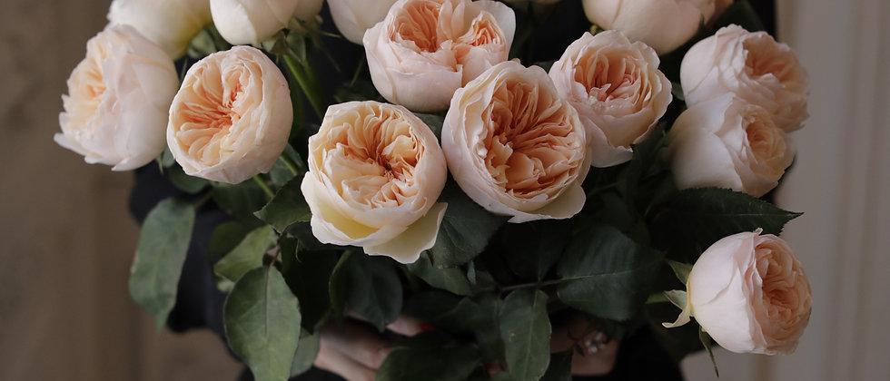 """розы Остина """"Джульетта"""" s/m/l"""
