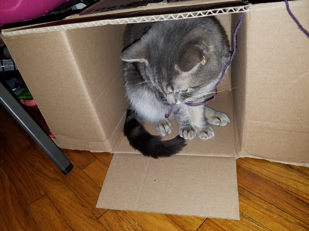 Frodo playing with yarn in a box! Because who doesn't like kitties?