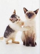 reiki animal, mascotas, salud, sanacion de tu mascota, energia, reiki