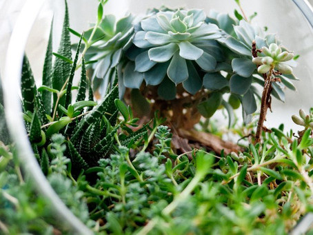 Clearing The Air: Plants To Combat Sick Building Syndrome