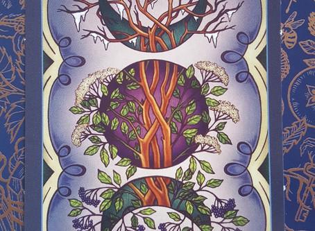Plant Wisdom: Elder