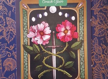 Plant Wisdom: Rose