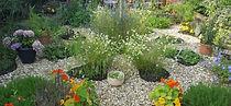 WytchWood Medicine Garden | Flourish | Holistic Medicine & Healing | Glasgow South Lanarkshire Scotland