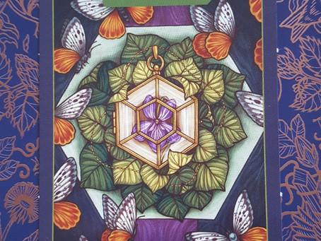 Plant Wisdom: Violet