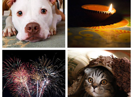 Firework Fear: 4 Ways To Comfort and Calm Our Companion Animals