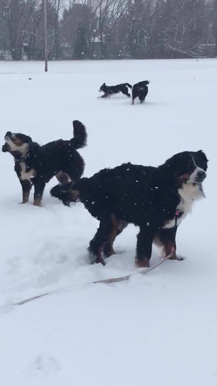 Taking a fun break from puppies out in the snow. And the girls love the snow
