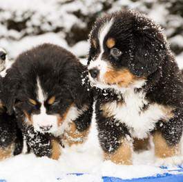 Assay pups.2018