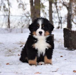 Assay pups 2018