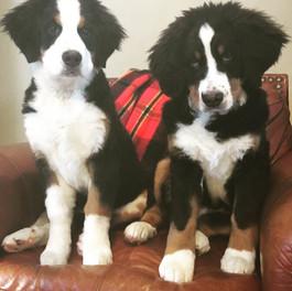 Tia and KIra, adorable puppies