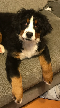 willow.3 months.png