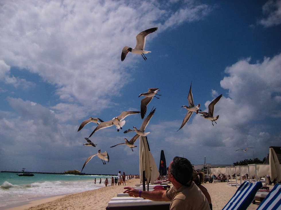 Seagulls and tourists at Playa del Carmen Beach in Yucatán, Mexico