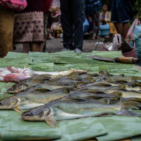Morning Market, Luang Prabang / Laos · 2015